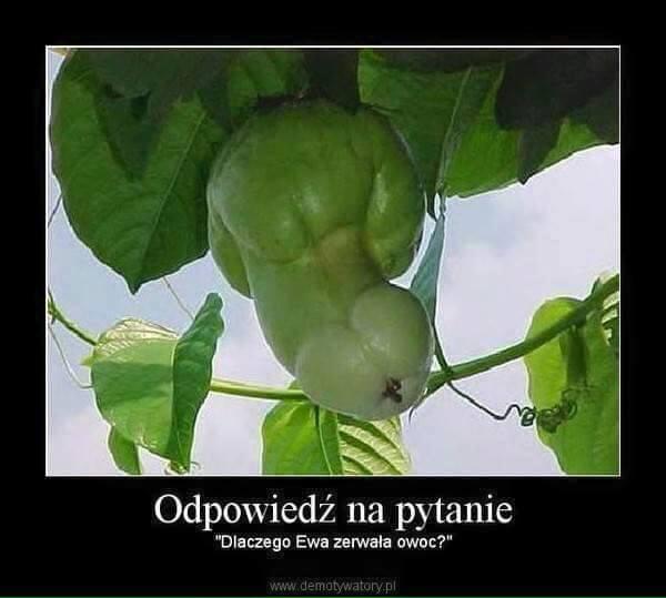 Zakazany owoc.